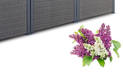 rattan sichtschutz windschutz polyrattan sichtschutzwand zaun set seitenmarkise ebay. Black Bedroom Furniture Sets. Home Design Ideas